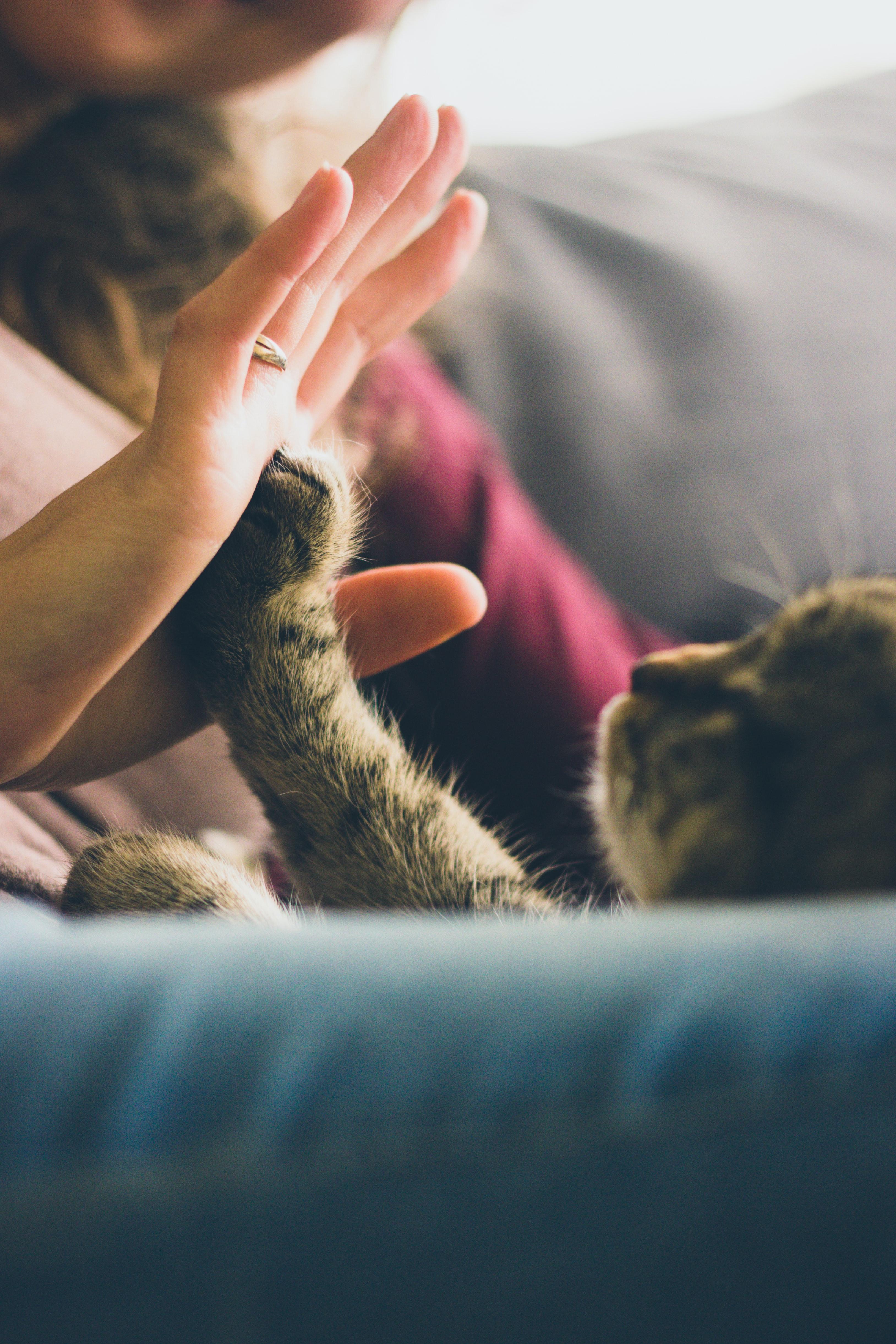 Kot podający łapę człowiekowi